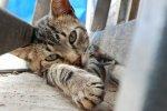 Как да научите питомците си да ползват тоалетни за котки?