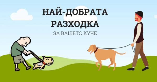 Най-добрата разходка за вашето куче!