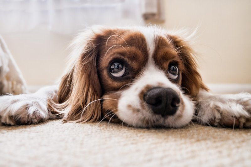 5 знака, че вашето куче е самотно
