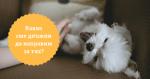 Десет неща, които трябва да направим за нашите кучета - 1 част