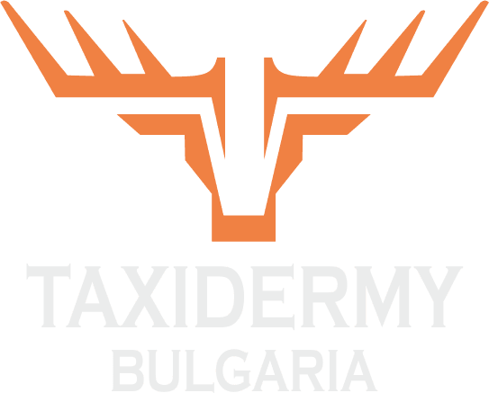 taxidermy-bg