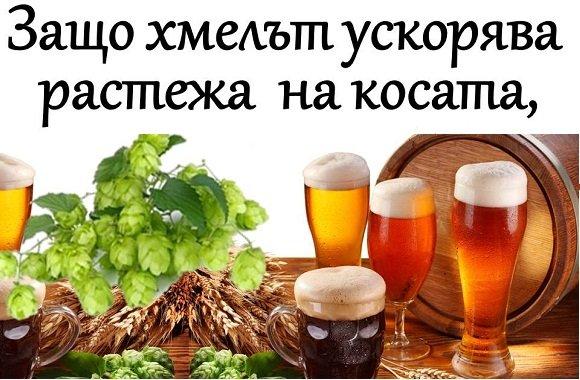 Защо хмелът ускорява растежа на косата, а бирата НЕ