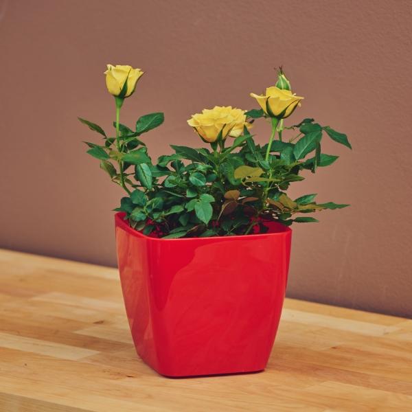 Рози - жълти