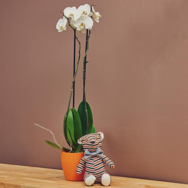 Орхидея - бяла