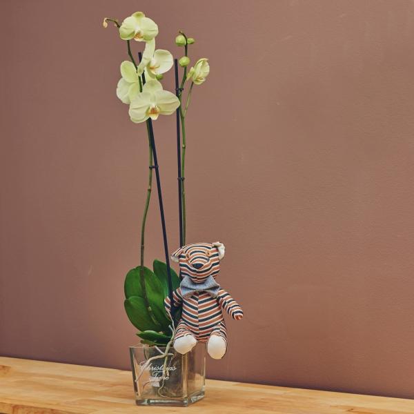 Орхидея - бледо зелена