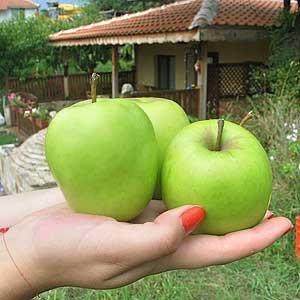 Ябълки - зелени