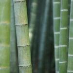 White Boutique Завивка Eco Bamboo