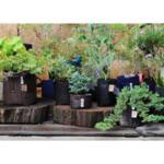 """Комбо Сет от 3 Червени Текстилни """"Root Builder"""" Контейнери за растения в 3 размера"""