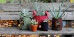 """Комбо Сет от Зелени Текстилни """"Root Builder"""" Контейнери за растения"""