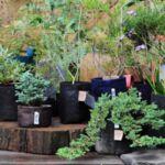 """Сет от Кафяви Текстилни """"Root Builder"""" Контейнери за растения в различни размери-Copy"""
