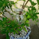 Луксозна стъклена чаша за капково напояване