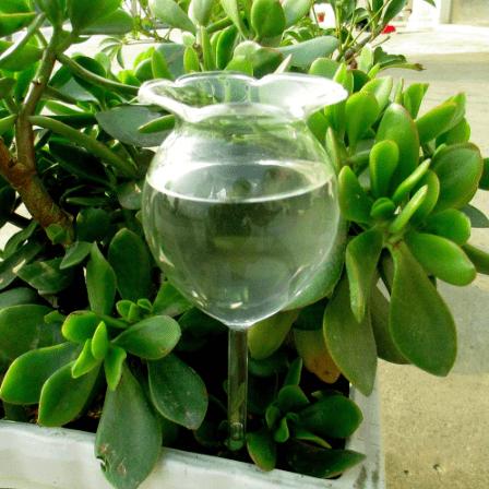 Луксозна стъклена чаша за капково напояване 300 мл
