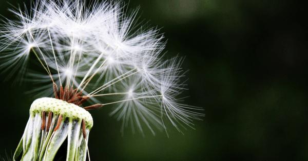Развиваме ли алергия към 21-ви век?