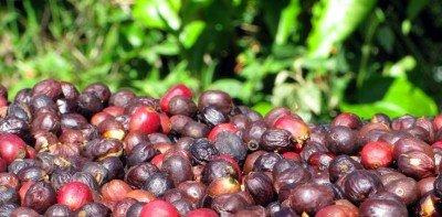 Натурално Кафе: Какво означава това?