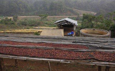 Кафе Тероар Етиопия Гати, Китеса