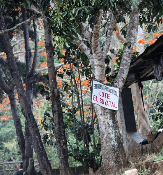"""Прясно изпечено """"Специално Кафе"""" Никарагуа, Дипилто Ел Суятъл"""
