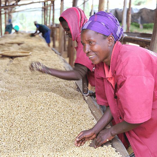 """Прясно изпечено """"Специално Кафе"""" Руанда, Южна провинция"""